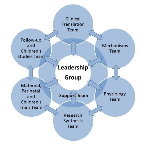 diagram showing relationships of LiFePATH teams