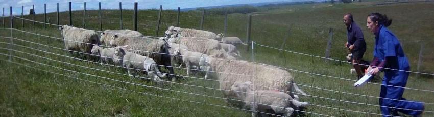 Liggins farm